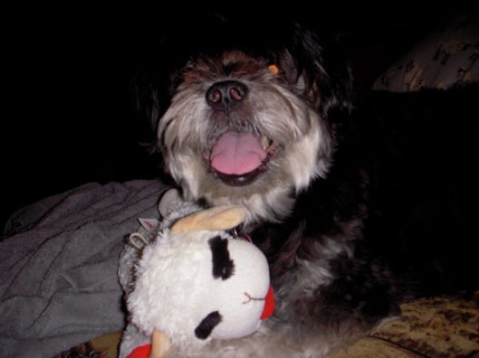 Lucy and Lamb Chop