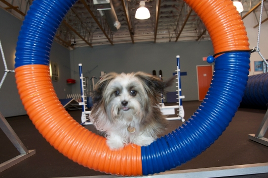Zooming through the bright Agility Tire at the Zoom Room