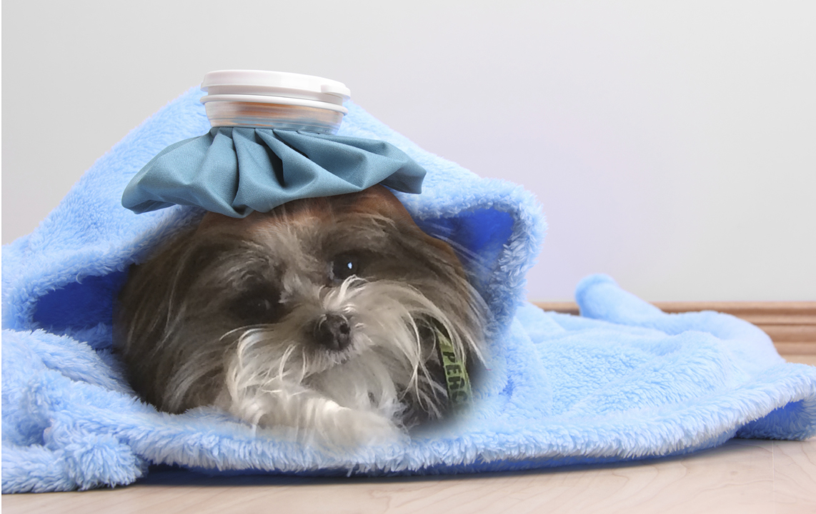 Upset Tummy How To Make Your Dog Feel Better A Dog Tales