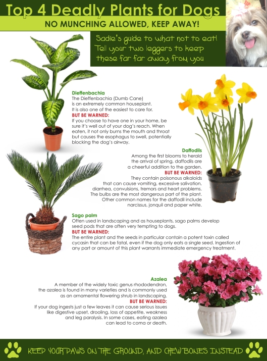 Sadie's Guide to deadly Dog plants