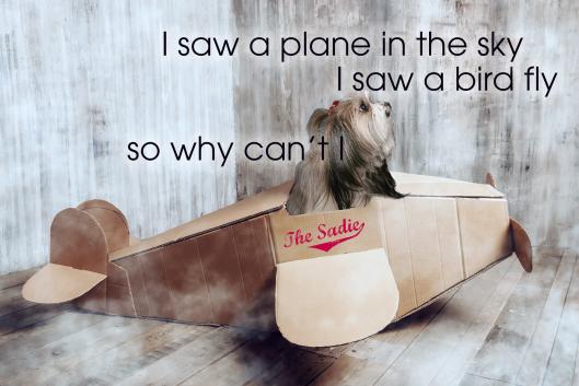 sadie_plane